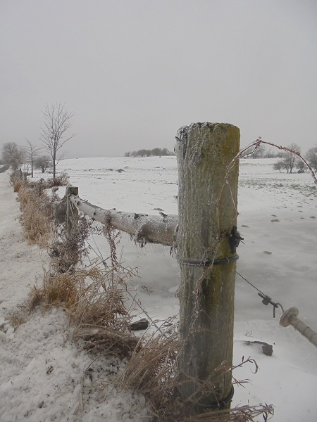 icy fencepost