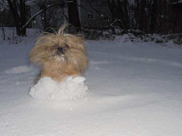 Shammah in snow