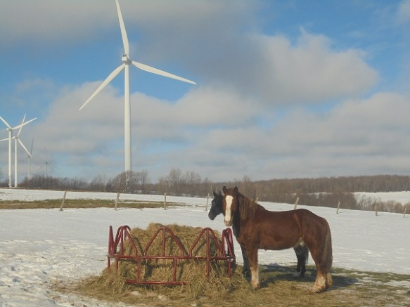 horses by the windmill